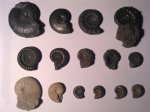AMMONITES FROM BURTON BRADSTOCK, DORSET, UNITED KINGDOM + STONEBARROW, CHARMOUTH, DORSET, UNITED KINGDOM