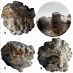 Labyrintolites sp.
